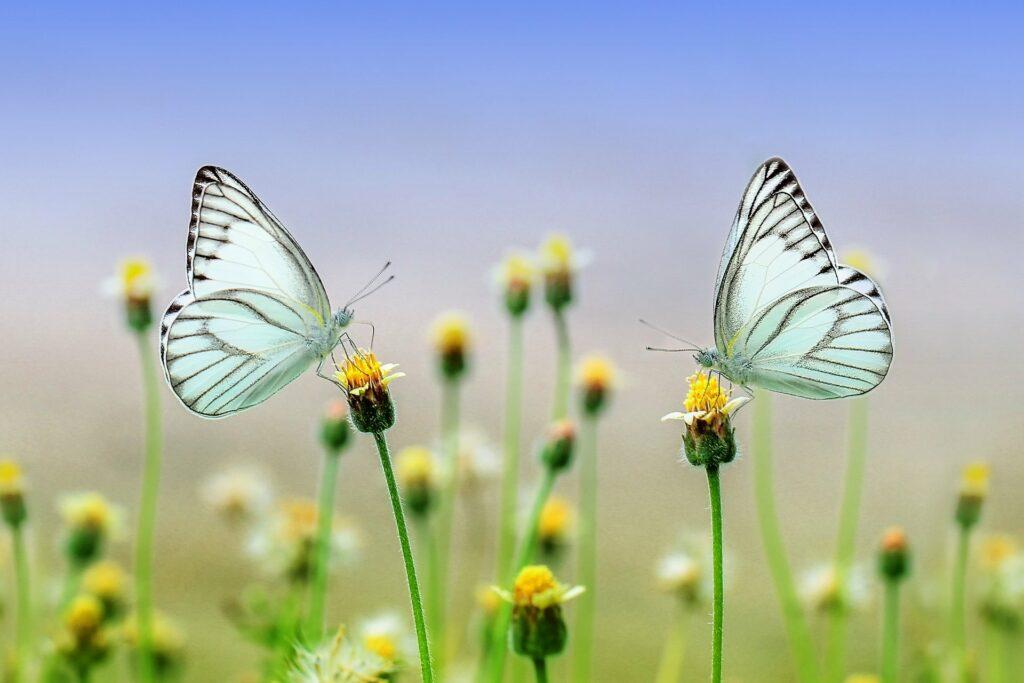 butterfly-1127666_1920